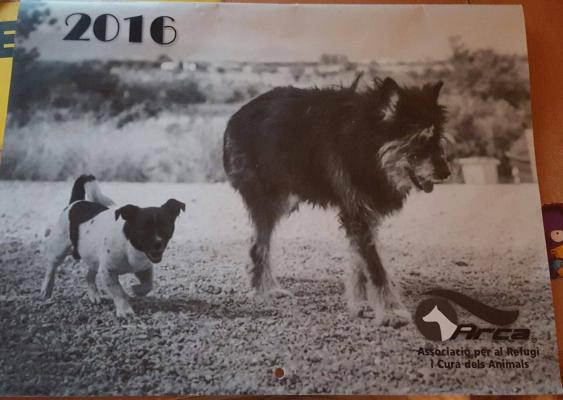 Ja tenim el calendari d'Arca per a l'any nou !!!