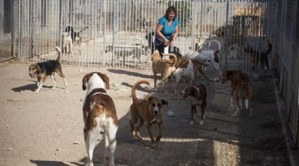 La protectora ARCA pierde la gestión de la perrera municipal