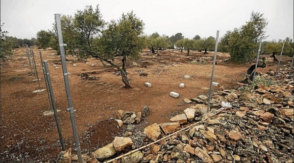 La protectora ARCA se traslada a Aldover tras perder la gestión de la perrera municipal de Tortosa
